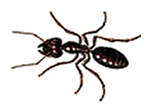 Oklahoma City Pest